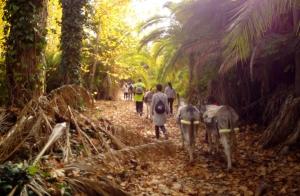 Burrafting: pasea con burro y navega  río